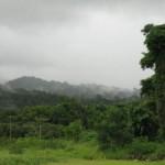 Regenwald, ein Traum in gruen